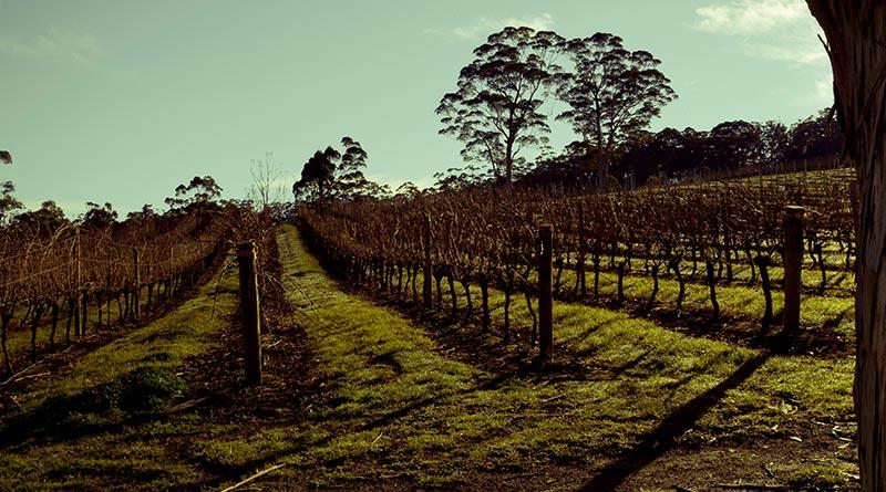 rockcliffe winer