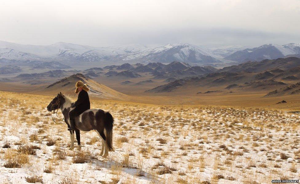 _74245694_horse_976